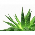 gel_aloes