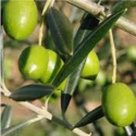 Huile d'Olive extra-vierge BIO